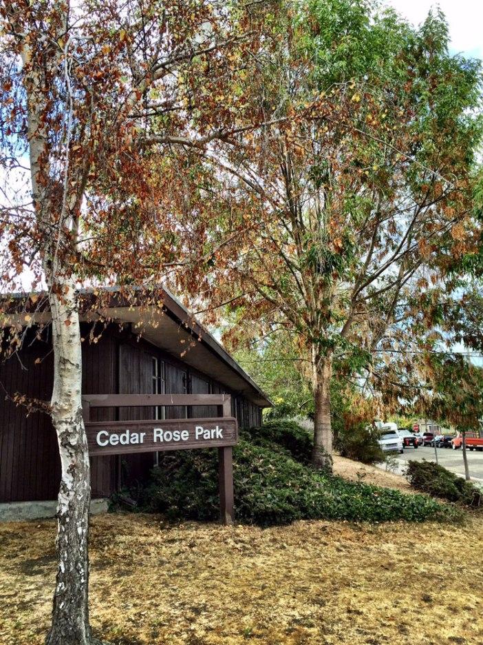 Cedar Rose Park